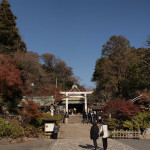 紅葉シーズンの鎌倉散歩(鎌倉宮~鶴岡八幡宮)