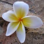 バリ島の綺麗になるお土産「ジャムウ」