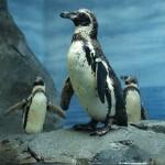 新江ノ島水族館「えのすい」