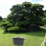 高松の回遊式大名庭園「特別名勝:栗林公園」