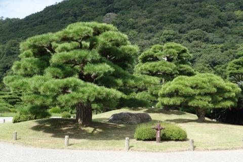 栗林公園鶴亀松