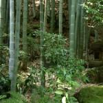 鎌倉散歩・十三仏巡り(前編)