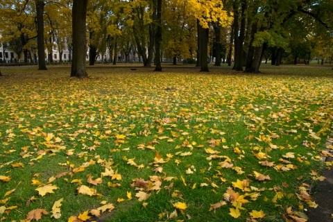 ラトビアの紅葉