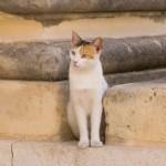 マルタ島-世界遺産の首都「ヴァレッタ」旧市街