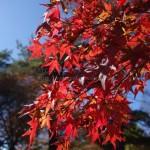 八ヶ岳の紅葉(東沢大橋)と清里散歩&高原ランチ