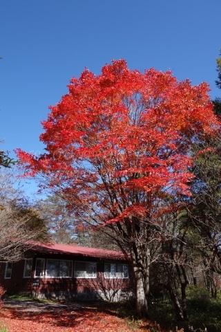 清里の紅葉