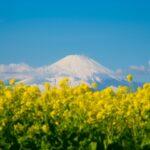 富士山を撮る!二宮町「吾妻山公園」へぶらり一人旅