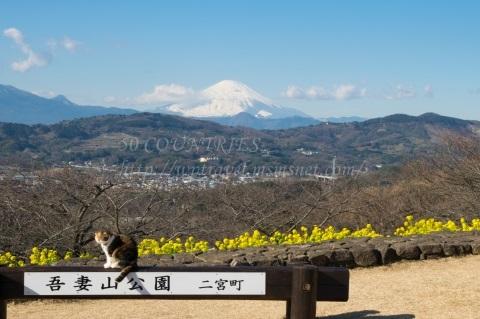 ネコ-吾妻山公園