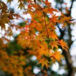 もうすぐ終わる紅葉が綺麗だった鎌倉「妙本寺」