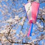 ほぼ満開!小田原城の桜2018見てきました