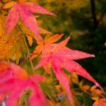神奈川方面から日光・鬼怒川温泉へのアクセス
