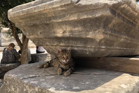 エフェソスの猫