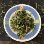 「スベリヒユ」という栄養満点の美味しい野草