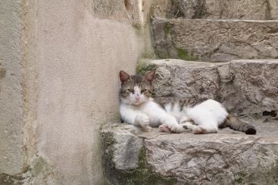 ドゥブロヴニクの猫